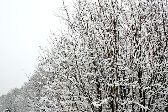 tree-lined and snow-covered