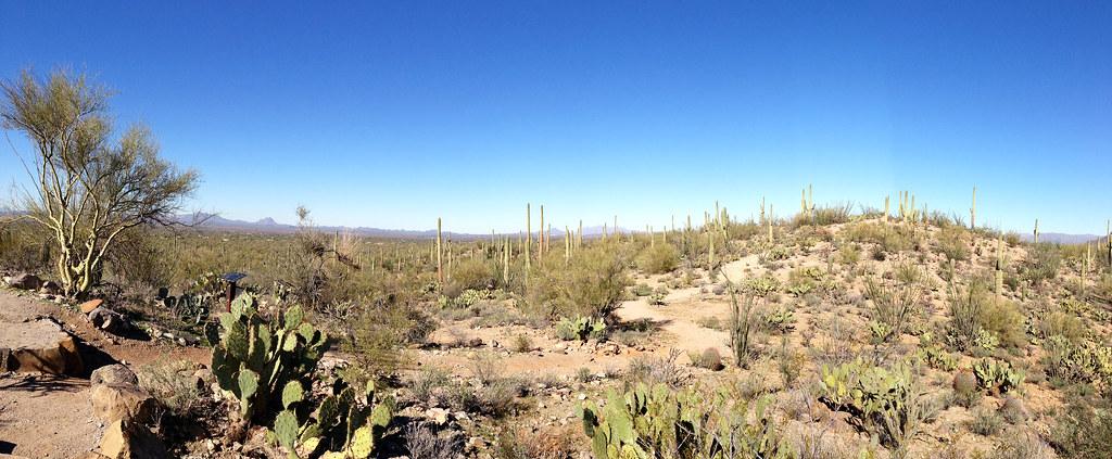 Saguaro NP Pano
