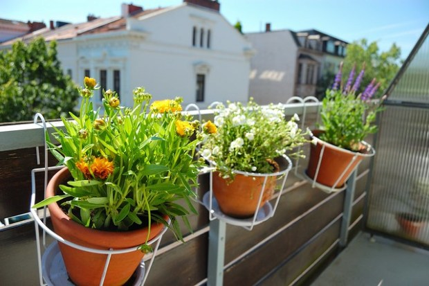 Balcony Garden: Bremen Edition | No Apathy Allowed