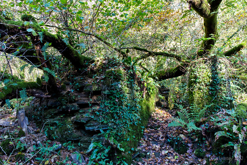 Part of the ruins of the old gunpowder works