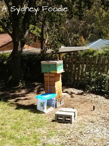 I, beehive