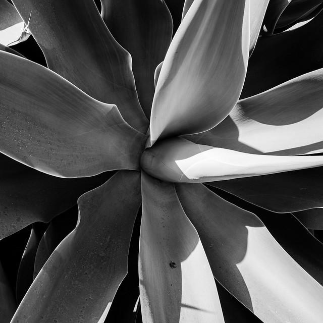 Succulent 3 (RAW)