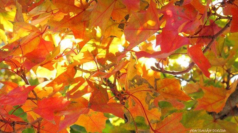 SF_autumn_leaves_web
