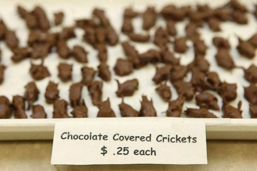 sweets-of-insects