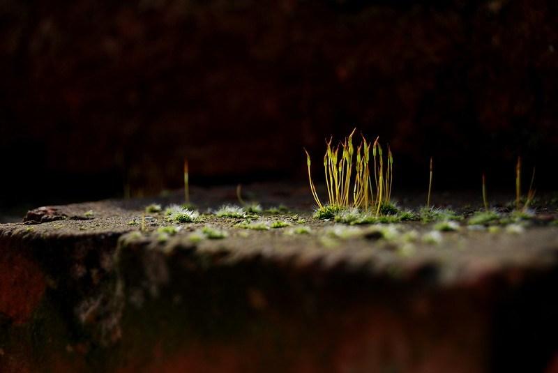 moss on a brick