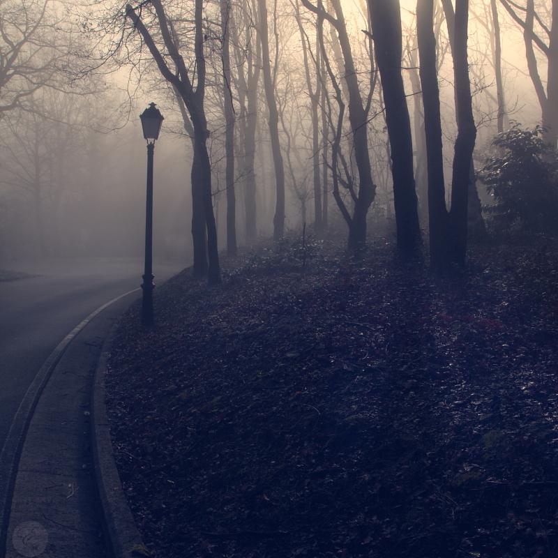 Nieblas matinales (4/4)