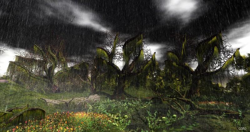 Wetlands - IV