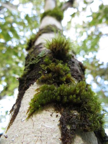 moss on a tree limb