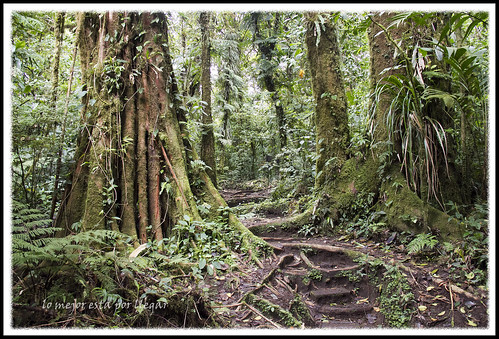 RESERVA NATURAL DE SANTA ELENA, MONTEVERDE, COSTA RICA