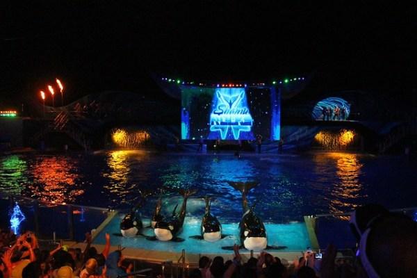 SeaWorld Orlando Summer Nights 2013