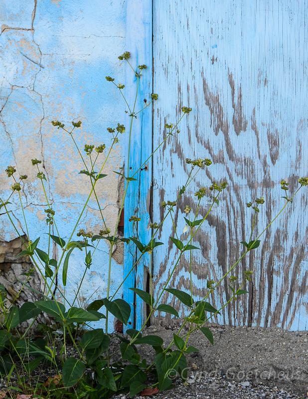 cjane, weeds