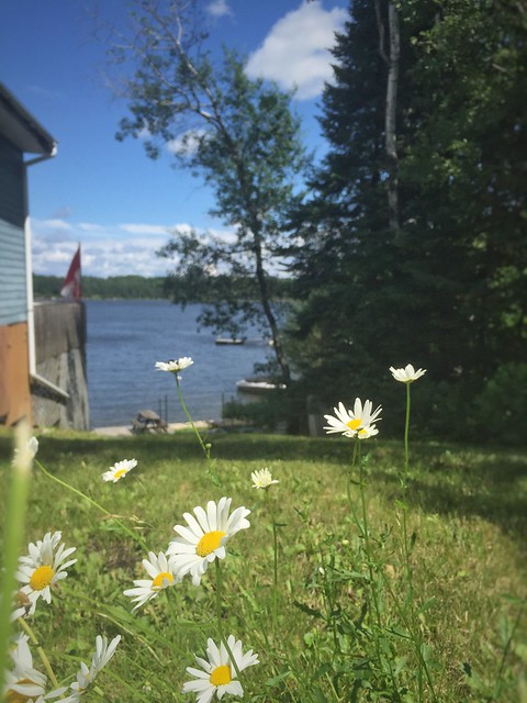 Cabin to left side, flowers focused in foreground with lake and trees behind in distance, unfocused.