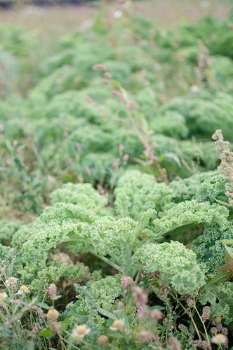 East Coast Organics