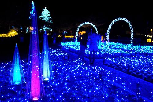 Nabana Winter Lights 012r