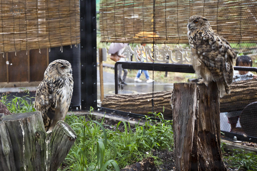The Owl Enclosure