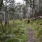 02 Viajefilos en Australia. Barrington NP 17