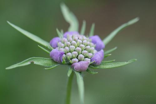 A hint of purple by nifwlseirff
