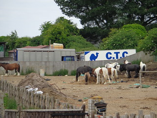 CTC =Camels Touring Club[?]