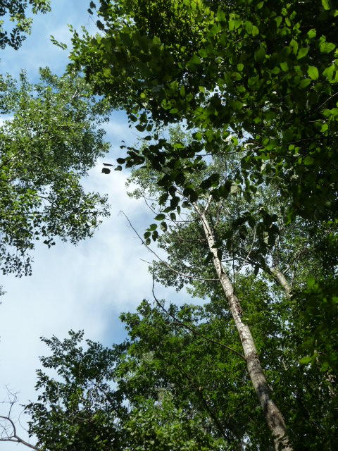Looking up II