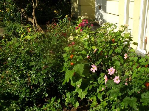 Vorgarten Ende August