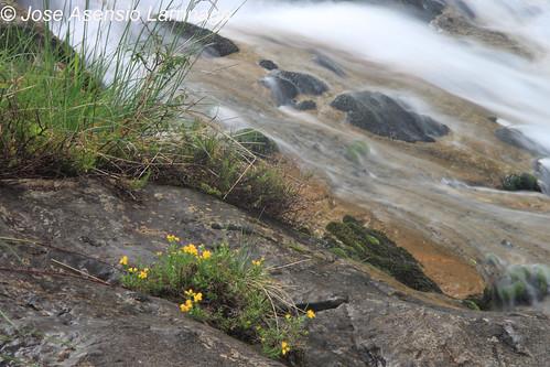 Cascada . Efecto seda #DePaseoConLarri #Photography  19