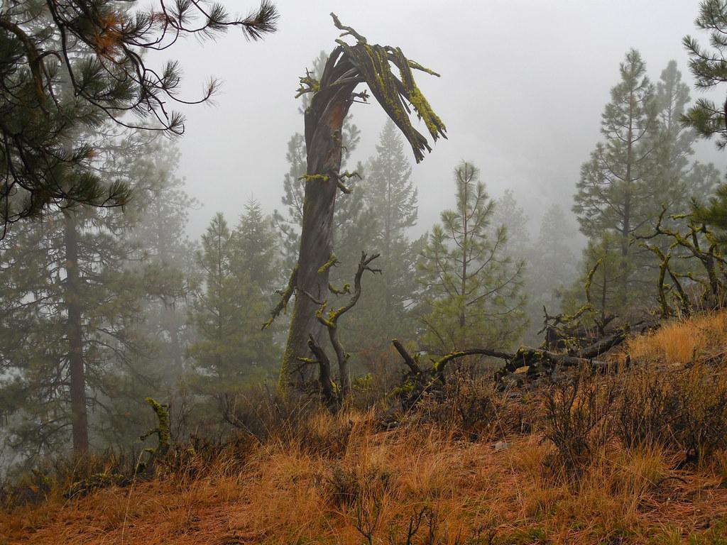 Tree skeleton ~ dragon