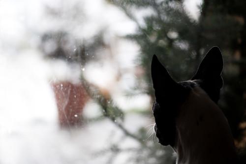 Neve, aspettami che me te magno!