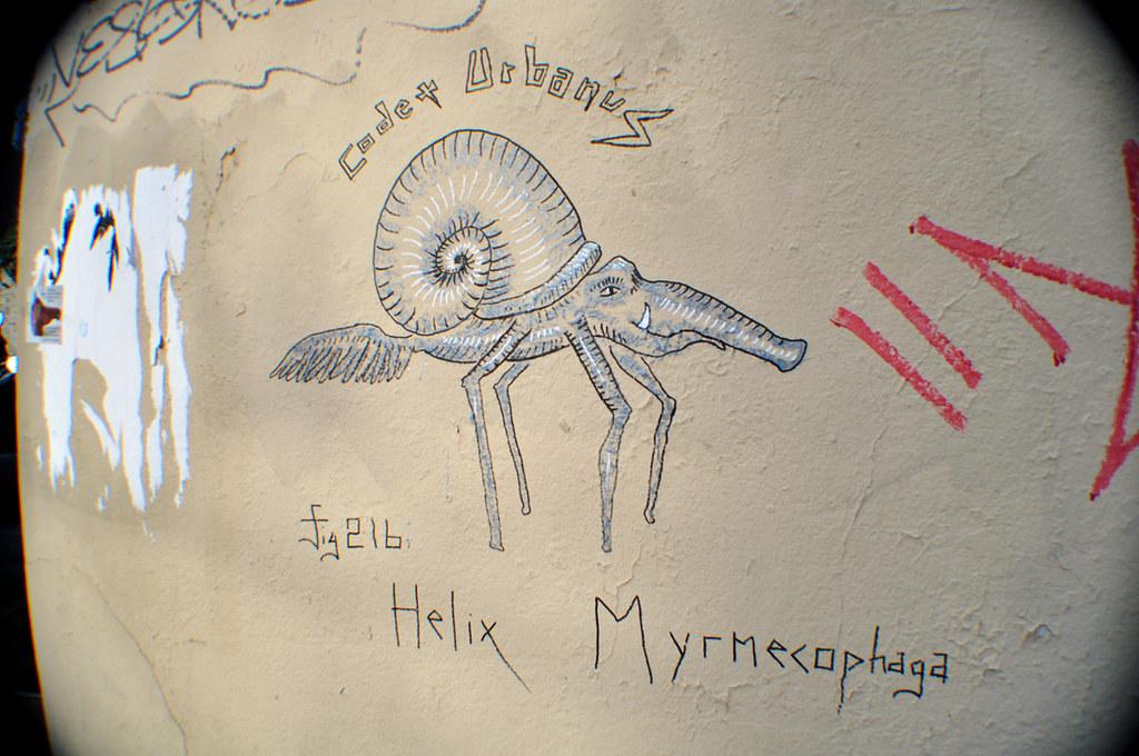 Fig.216 Helix Myrmecophaga