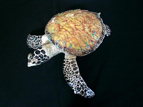 Sea Turtle3RBG