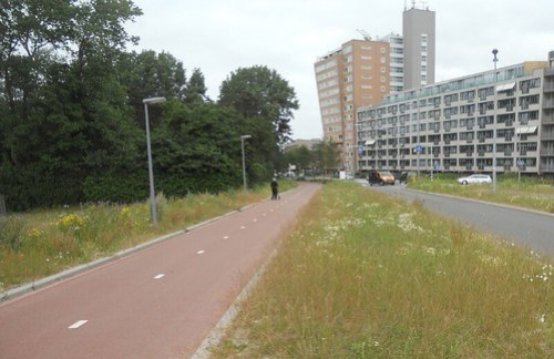 Nigel - Hoek van Holland
