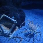 Oceanografic Miguel, acuario 08