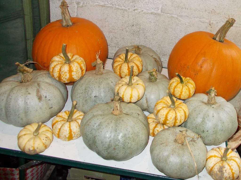 pumpkin and squash
