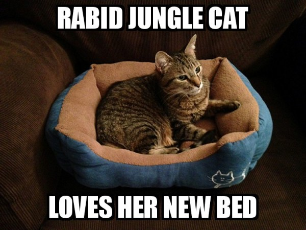 RABID JUNGLE CAT LOVES HER NEW BED