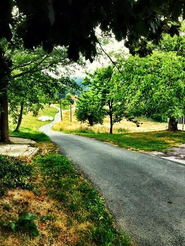 High summer morning by SpatzMe