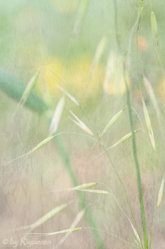 Impressions de fleurs et de l'herbe dans le vent