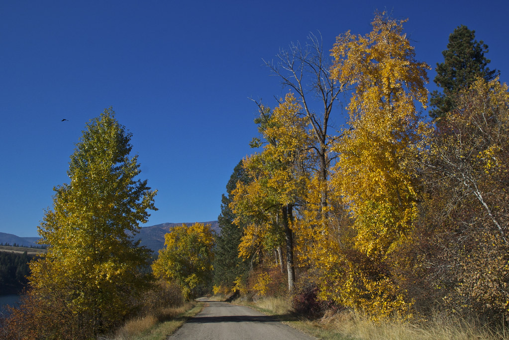 Cottonwoods in Autumn