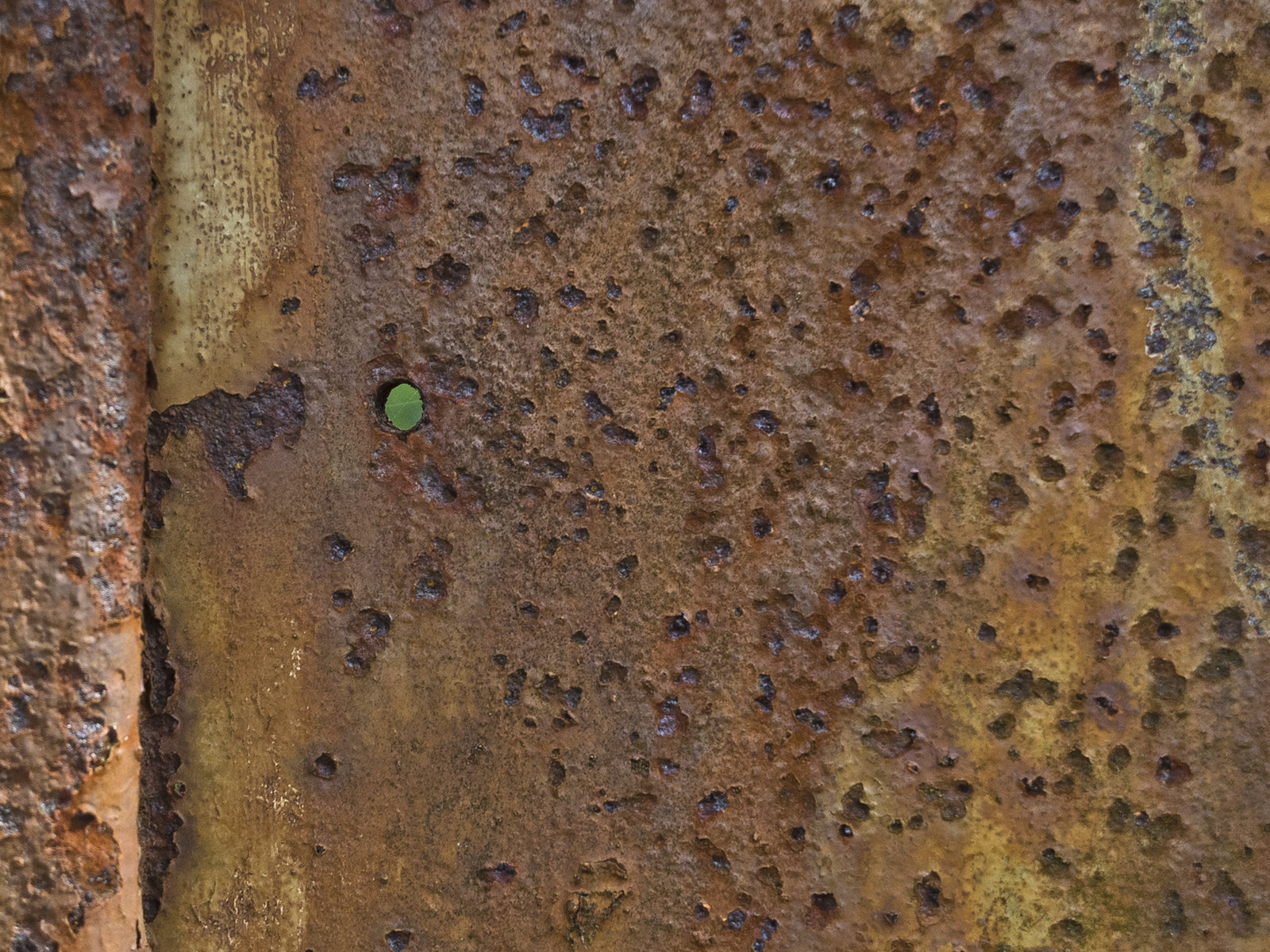 Green in the Rust