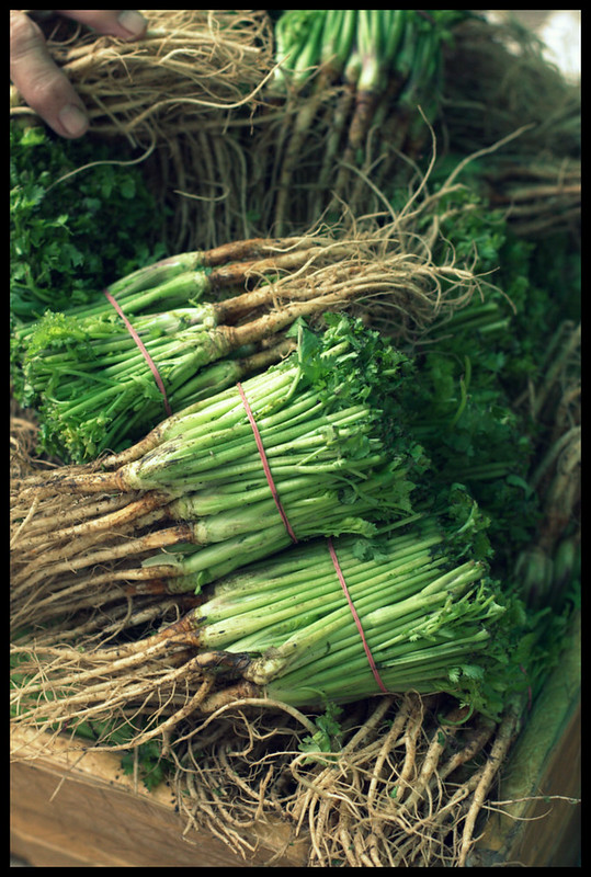 thai coriander roots