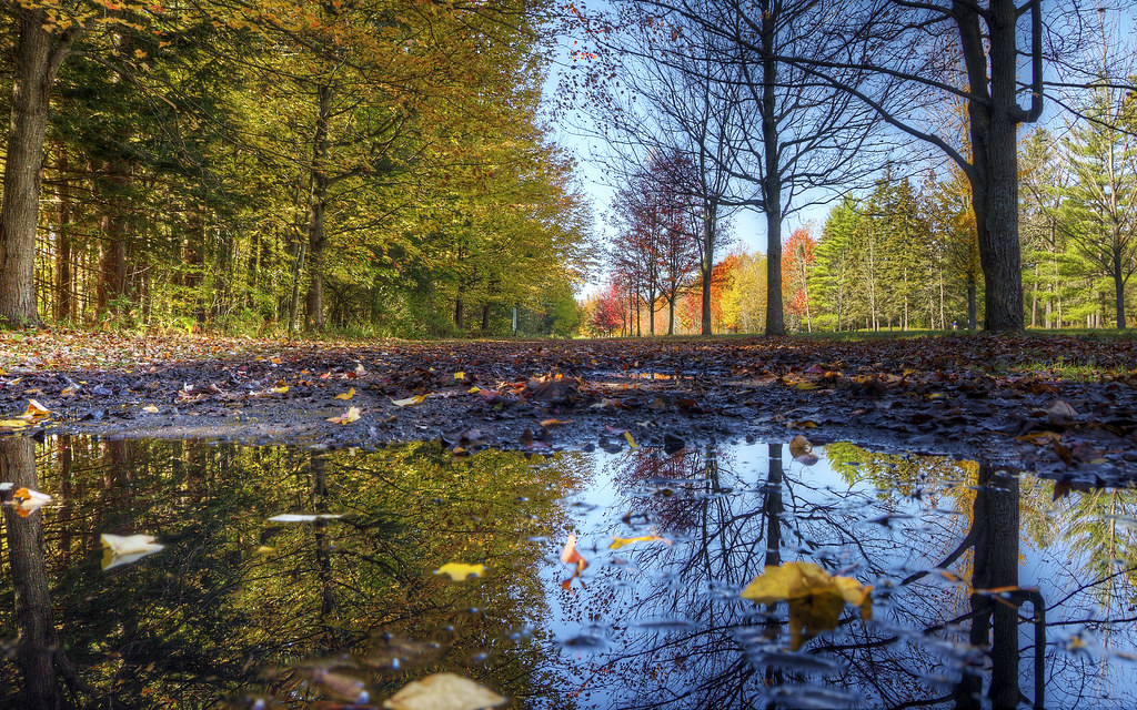 Fall on the Avenue of the Elms