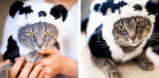 kitty halloween