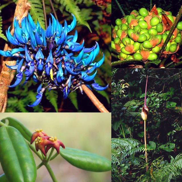 Rare Plants (Photo by Michael Calaramo