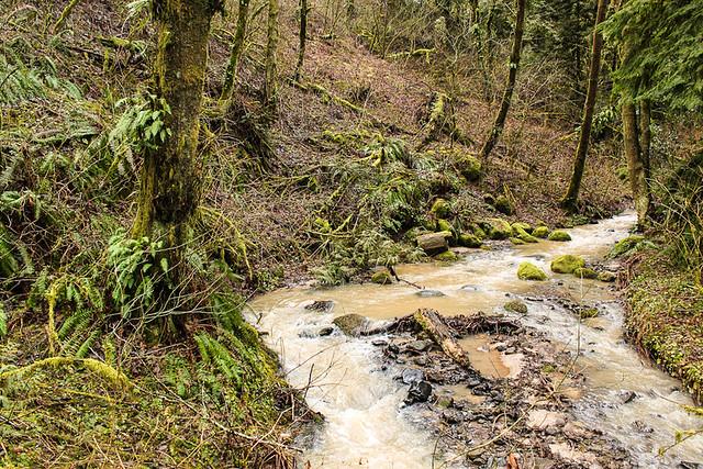 Balch Creek, Audubon Society of Portland, Oregon
