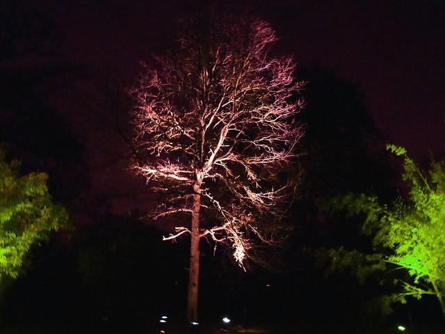 kew-gardens-after-dark-8