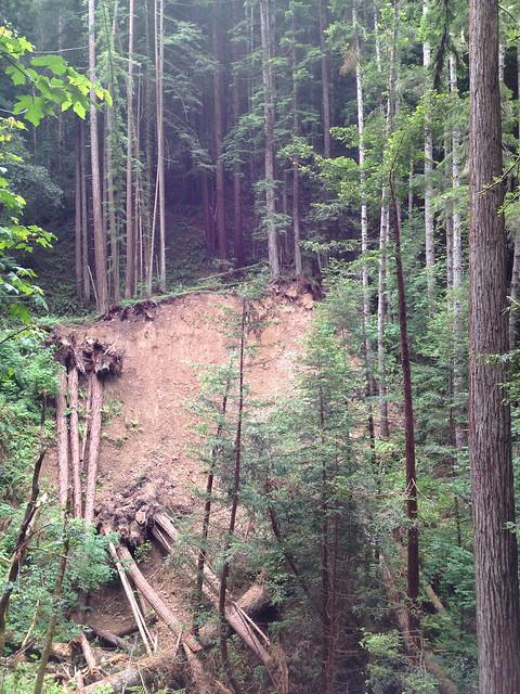 Fallen redwood trees
