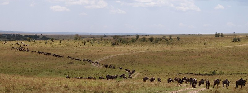The last of the Great Migration