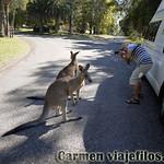 01 Viajefilos en Australia. Morriset 01