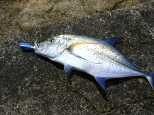 """Nice omilu caught with a lure I bought at A&P Gary's."" - Thanks Gary - Corey"