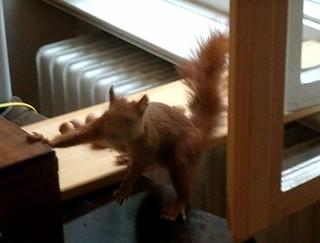 Eichhörnchen mag keine Grissinikekse 6