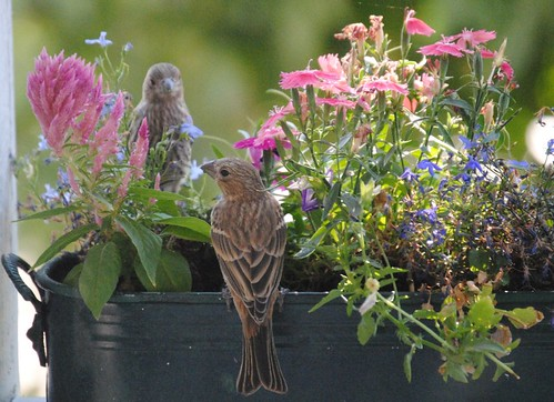 birds and flowers (6/6)