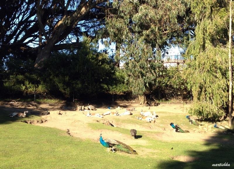 San Francisco Zoo (29)